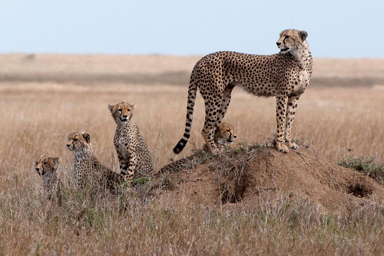 Tanzanie La famille janv 2017