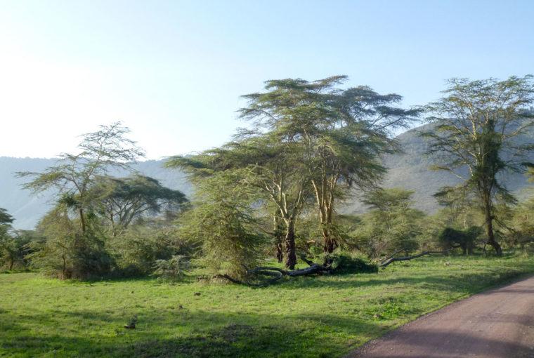 Tanzanie Paysage africain Janv 2017
