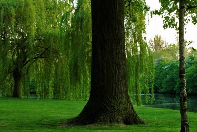 Les 3 arbres Mai 2007