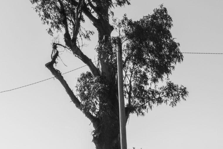 Tasmanie-96