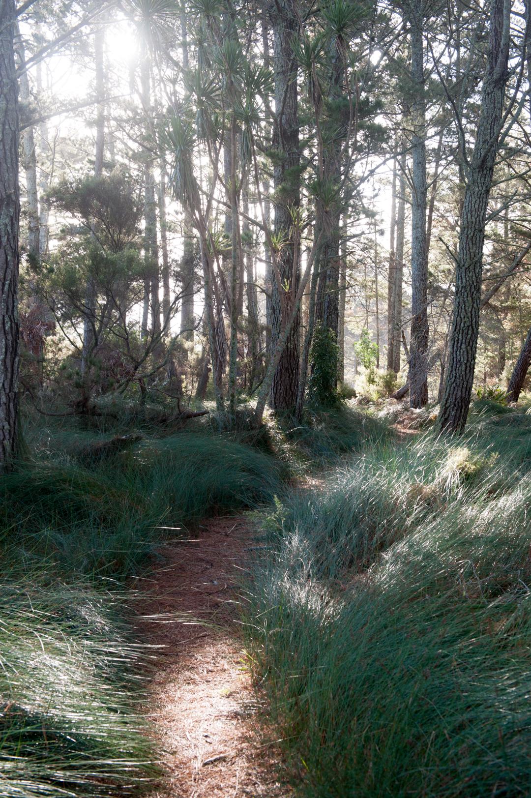 Road Trip NZ ile du Nord-113