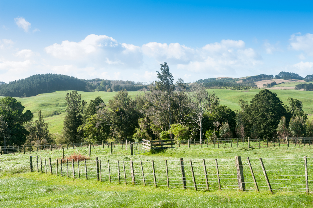 Road Trip NZ ile du Nord-120