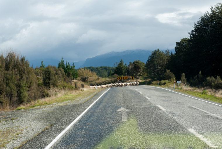 Road Trip NZ ile du Sud-114