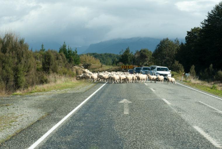 Road Trip NZ ile du Sud-115
