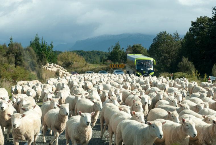 Road Trip NZ ile du Sud-116