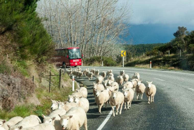 Road Trip NZ ile du Sud-117