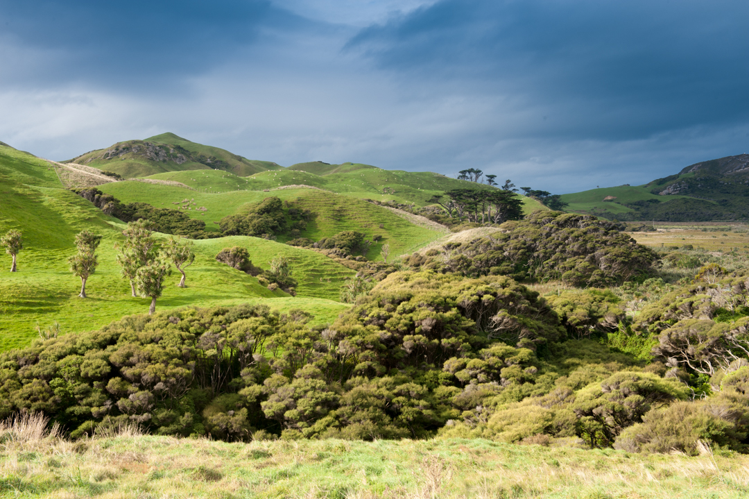 Road Trip NZ ile du Sud-228