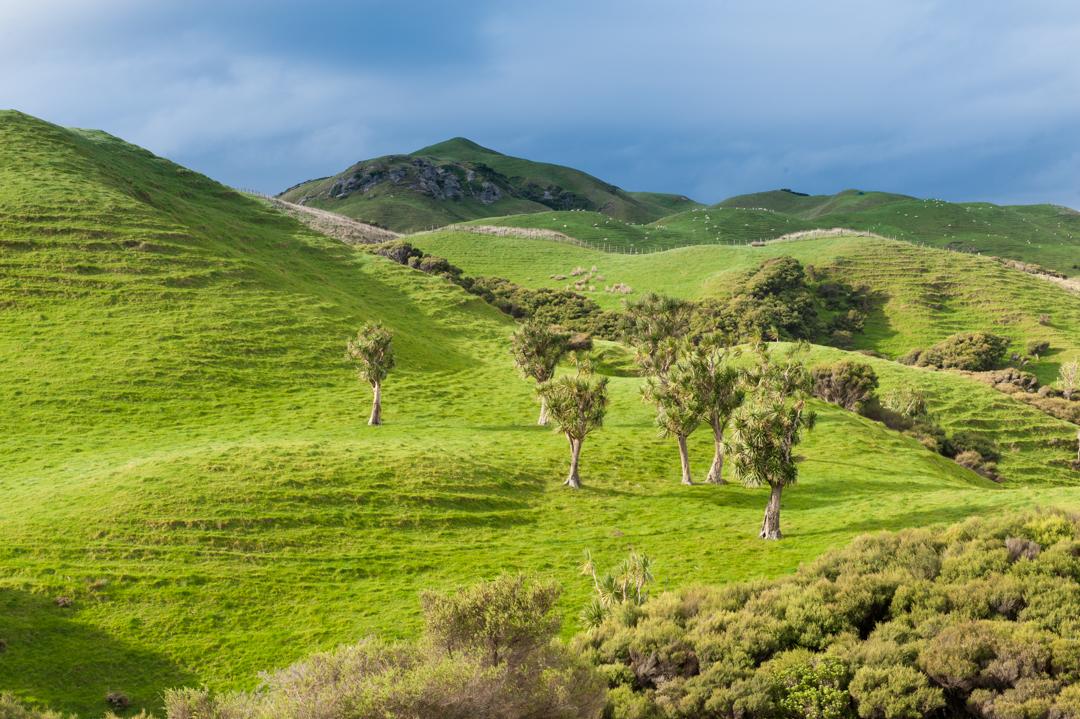 Road Trip NZ ile du Sud-229