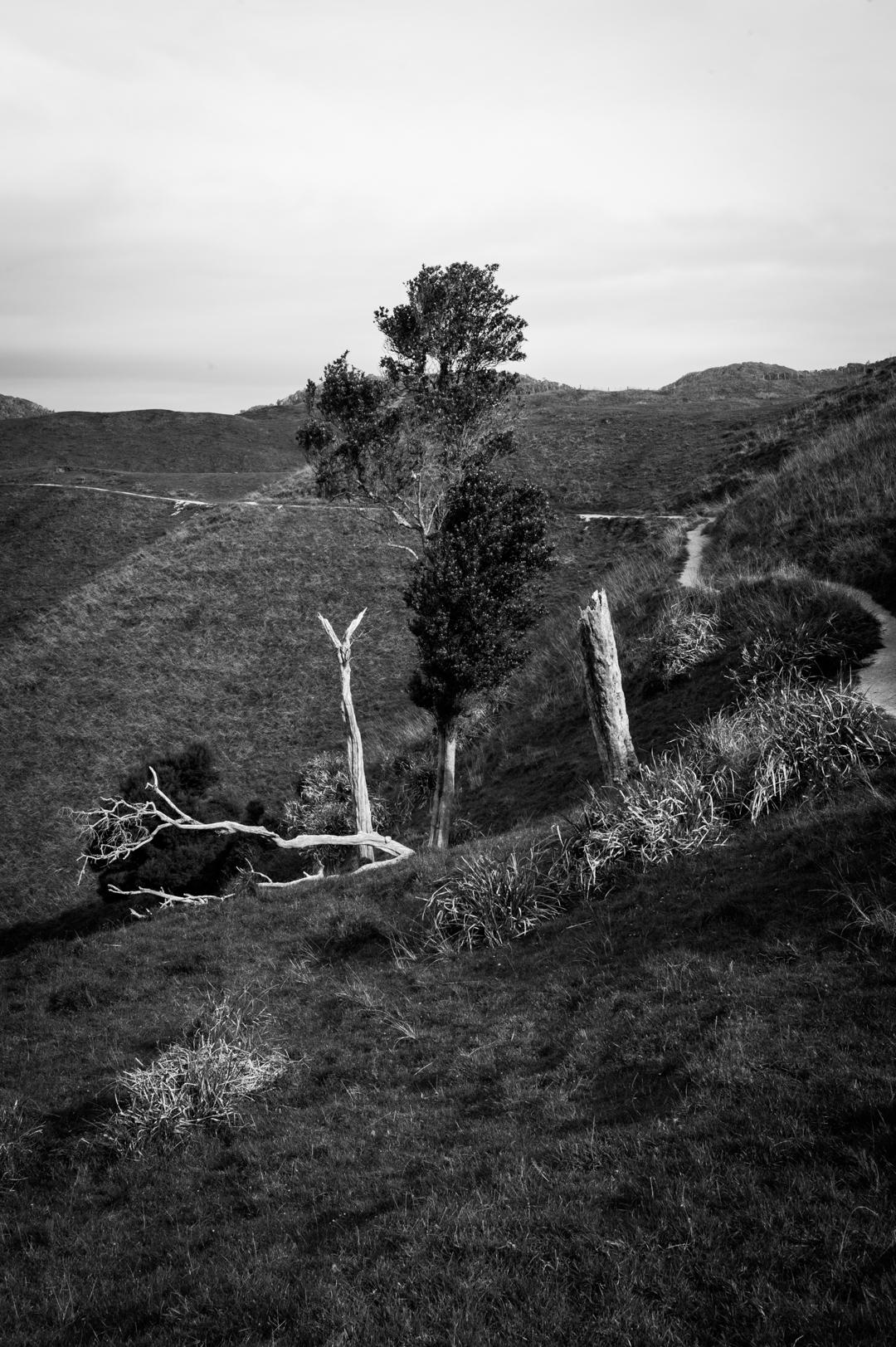 Road Trip NZ ile du Sud-232