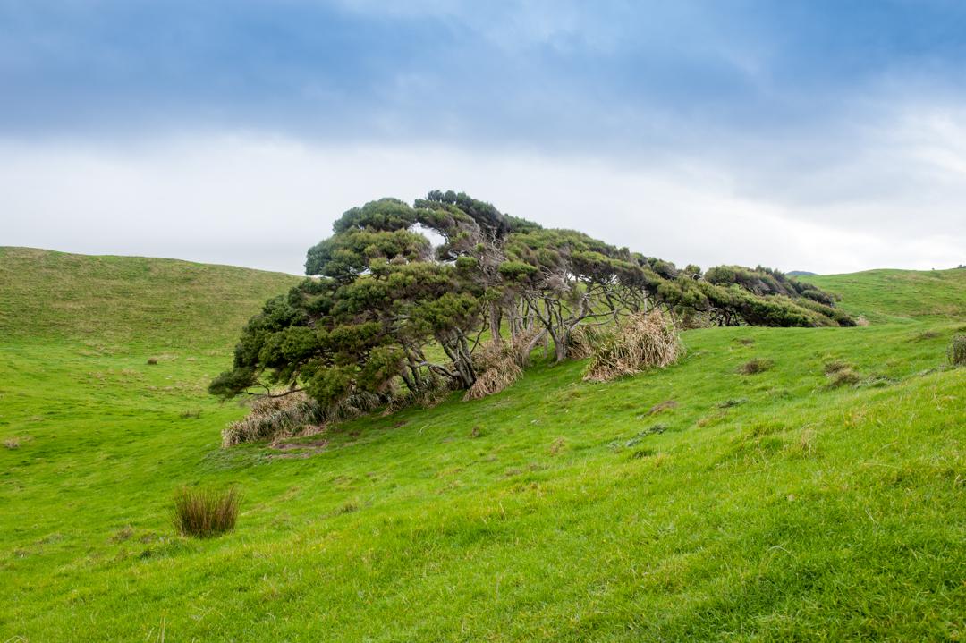 Road Trip NZ ile du Sud-244