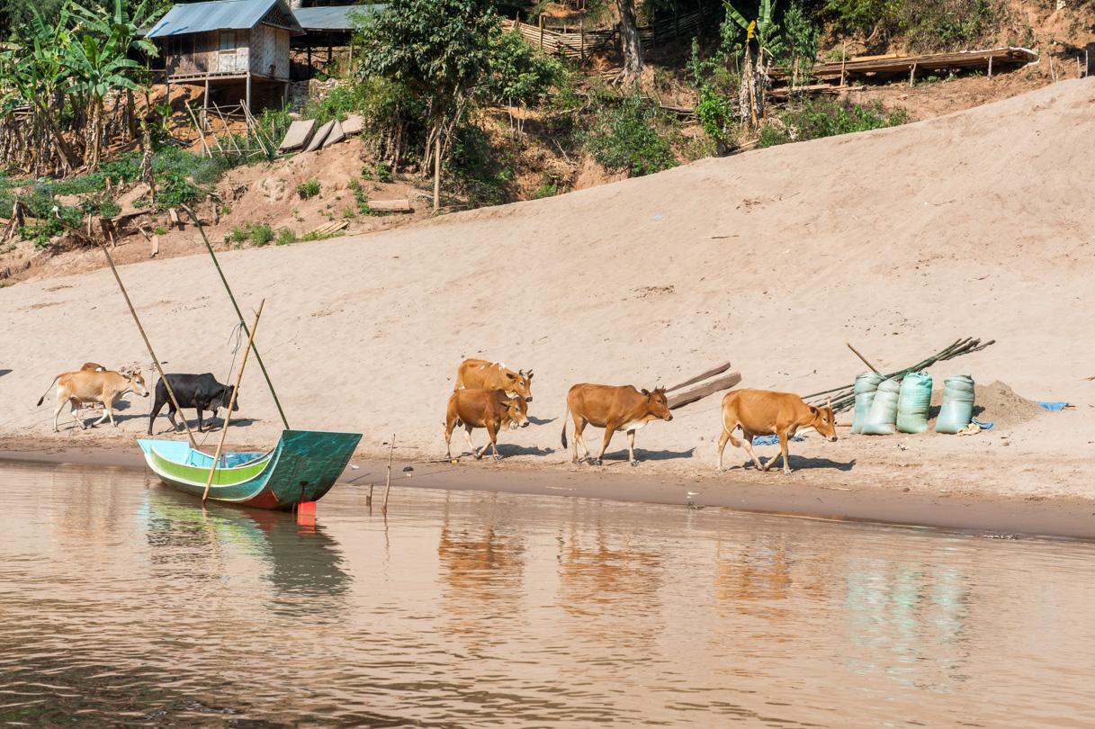 Laos de Nong Khiaw à Mong Ngoi-83