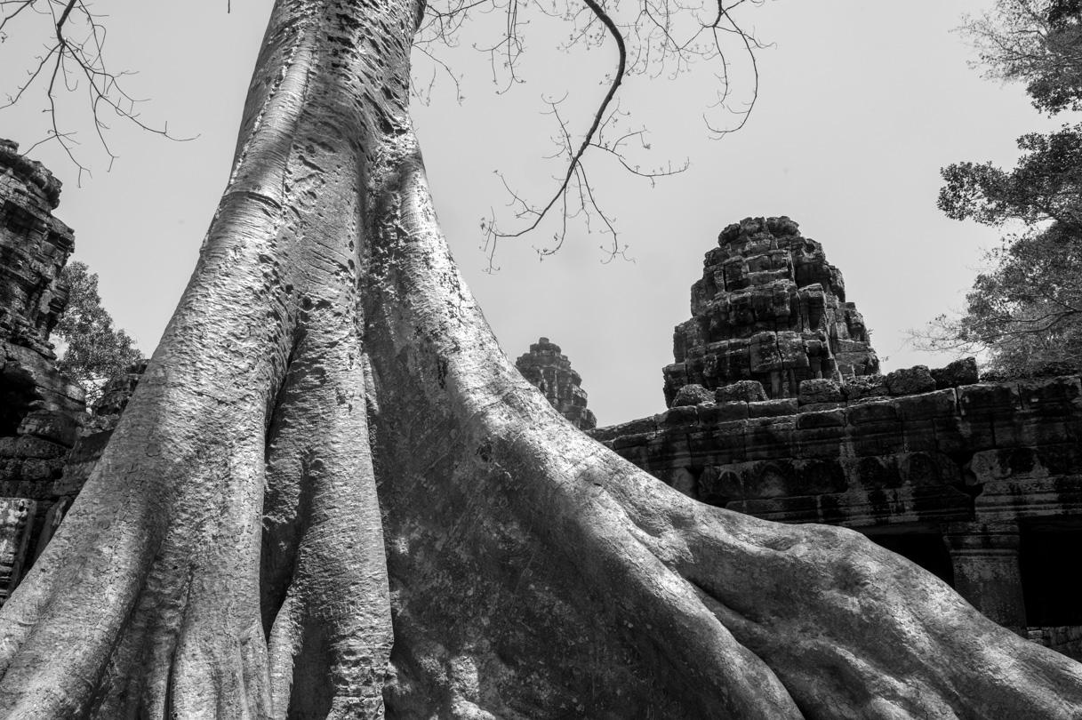 Cambodge Temples d'Angkor-103