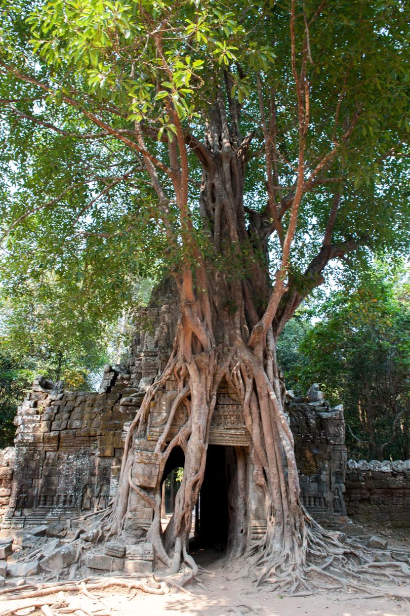Cambodge Temples d'Angkor-164