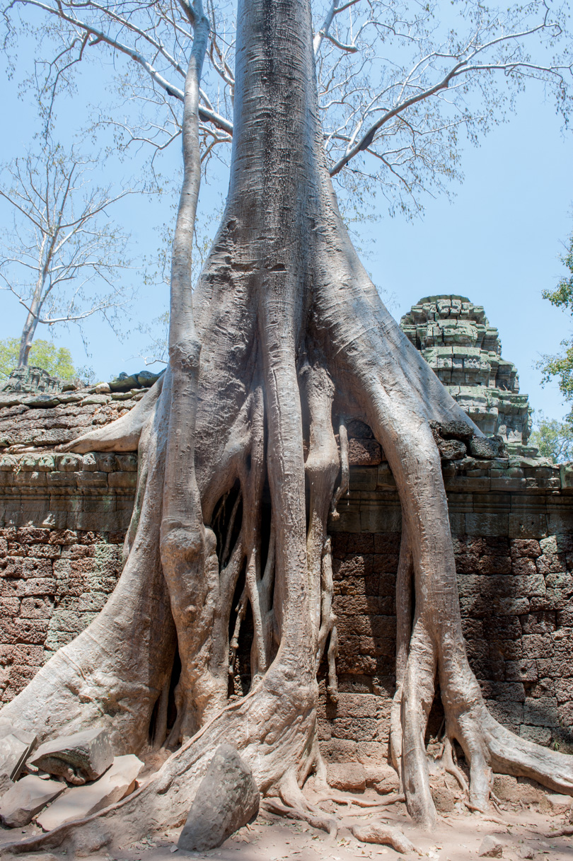 Cambodge Temples d'Angkor-89