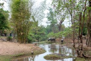 Laos Don Det-78