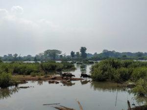 Laos Don Det Mathieu-3